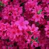 panaszok-Virág